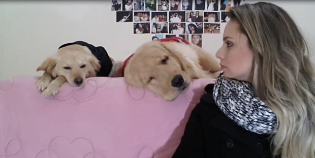 vídeo de agradecimento 100 inscritos blog achilla lima cachorro golden retriever